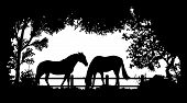 picture of horses eating  - black and white Animal of wildlife  - JPG