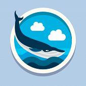 foto of orca  - Killer whale - JPG