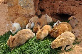 picture of furry animal  - Rabbits feeding on grass and rabbit hole - JPG