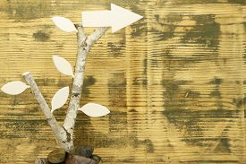 image of birchwood  - Background of used wood with birchwood and wooden arrow to the right - JPG