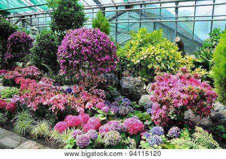 Flowers In Palmen Garten in Frankfurt, Germany on Mai 2012