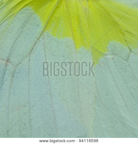 Yellow Butterfly Wing