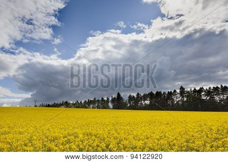 Beautiful landscape with rapeseed field and sky full of clouds