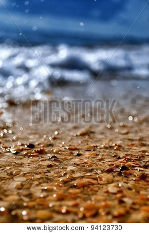 Summer Seashell Beach