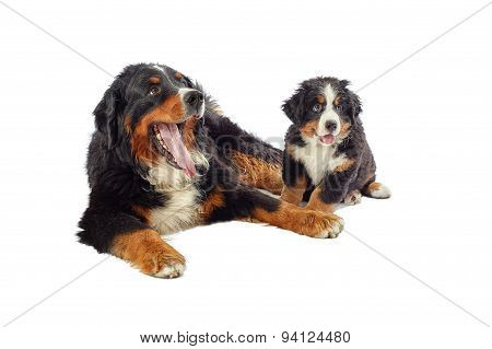 Dog With His Puppy
