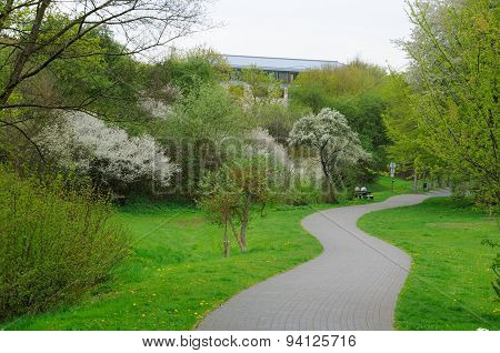 Blooming Alley With Trees In The Park In Fulda, Hessen, Germany
