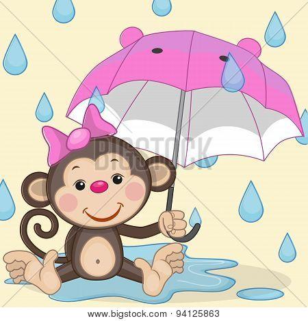 Monkey And Umbrella