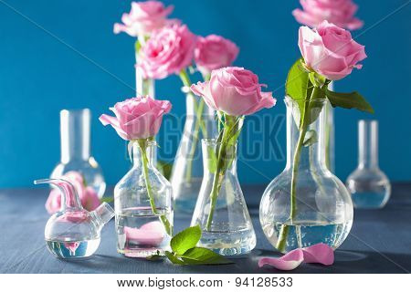 pink rose flowers in chemical flasks over blue