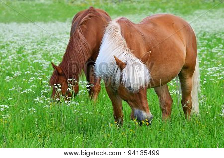 Two horse on meadow
