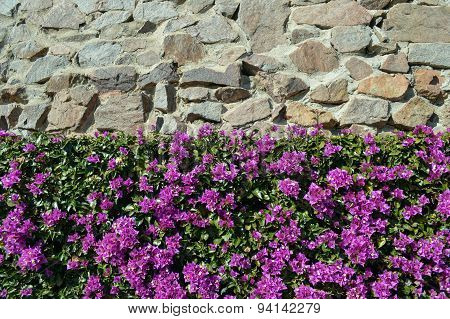 Stone wall and purple flowers