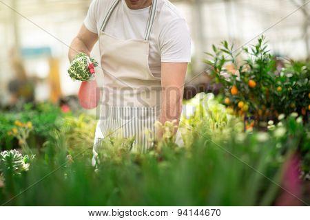 man watering flowers in greenhouse
