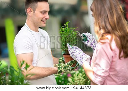Woman pruning plants in greenhouse