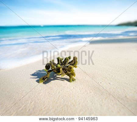 coral on white sand against the beautiful sea