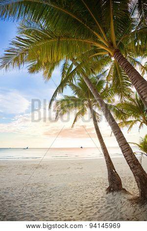palm and beach, beautiful tropical resort