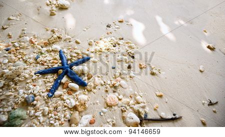 blue starfish on the shore is driven waves, lying on colorful pebbles