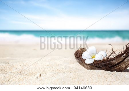 coconut shell on the sand of a beautiful beach in Philippine