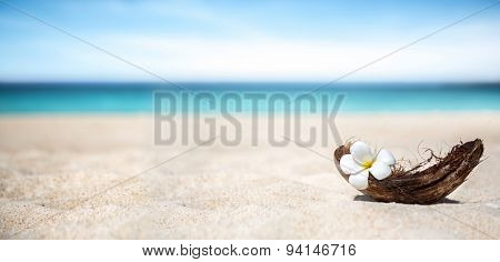 White frangipani flower in frangipani flower on beach