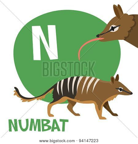 Funny cartoon animals vector alphabet letter set for kids. N is Numbat.