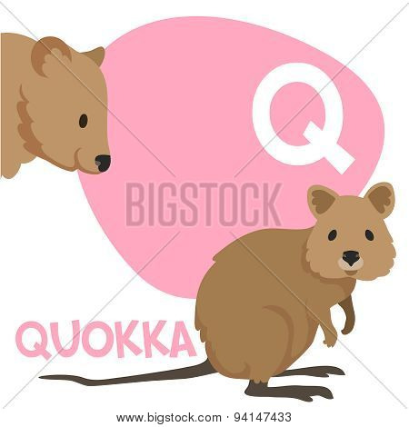 Funny cartoon animals vector alphabet letter set for kids. Q is Quokka