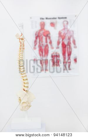 Composite image of anatomical spine in clinic