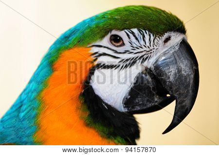 Focusing On The Beak Of A Blue-and-yellow Macaw