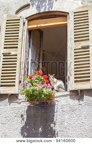 Window of old rural house and a flower