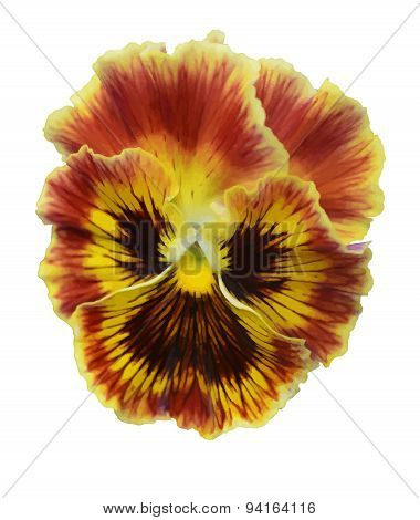 Pansies flower