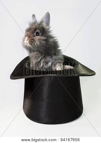 Rabbit bunny in top hat