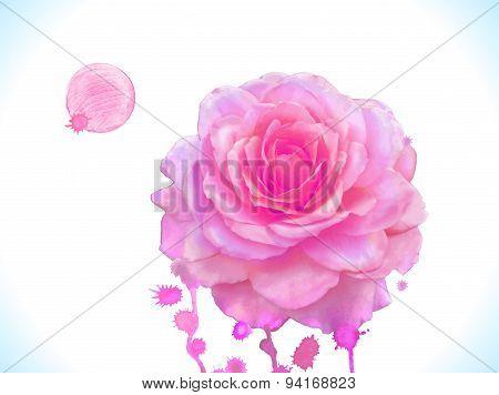 Watercolor vector pink rose.
