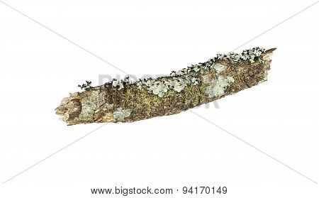 Tree Stick With Moss Isolated On White Background