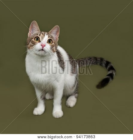 White And Gray Striped Cat Sitting On Green