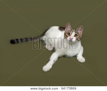 White And Gray Striped Cat Lies On Green