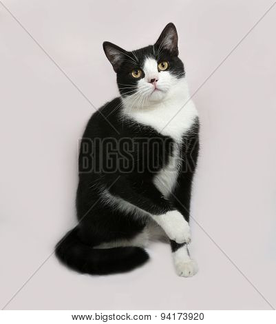 Black And White Cat Sitting On Gray