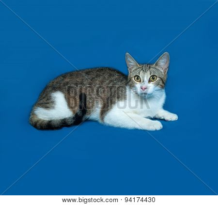 Tricolor Striped Cat Lies On Blue