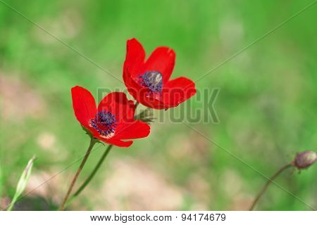 Two Red Ademones On Green Background