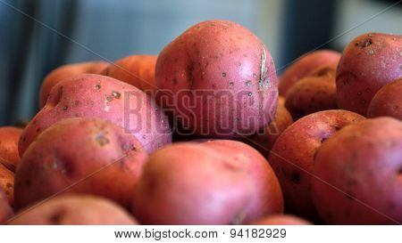 Red New Potatoes Against Blue Gray Background