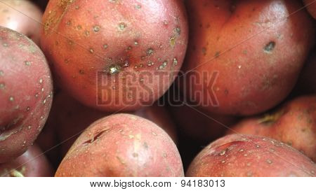 Extreme Closeup Of Red New Potatoes