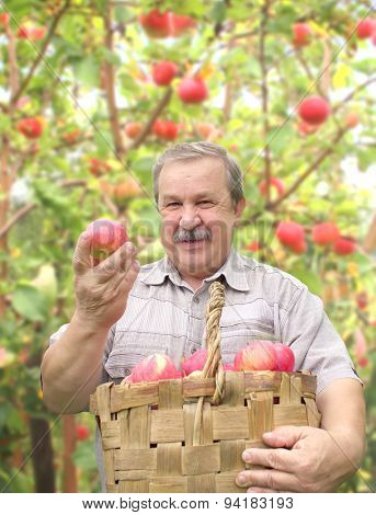 Elderly man, harvesting a apple in garden