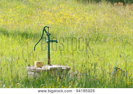 Green Waterpump In Meadow Full Of Yellow Flowers