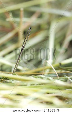 Needle in hays