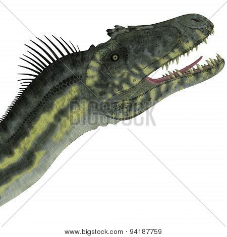Deltadromeus Dinosaur Head