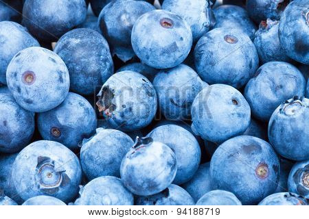 Bunch Of Freshly Picked Blueberries - Close Up Shot