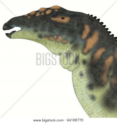 Ouranosaurus Dinosaur Head