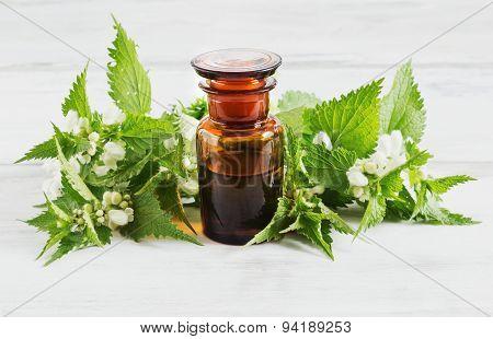 Nettle Essence Oil
