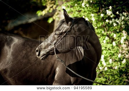 Black Horse With Garden Flowers Behind
