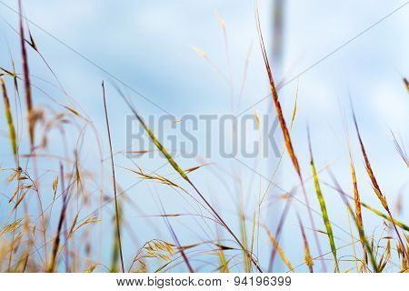 Colored straight grass blades of different kinds on meadow on sky background