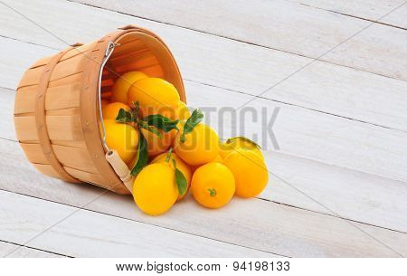 A basket full of fresh picked lemons on its side with fruit spilling out. Horizontal format on a rustic wood table with copy space