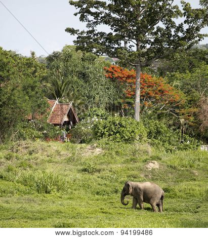 Elephant Under Huge Orange And Green Trees