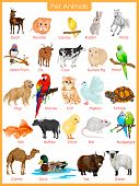 image of herbivore animal  - easy to edit vector illustration of chart of pet animals - JPG
