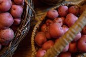 stock photo of solanum tuberosum  - Basket full of fresh new potatoes locally grown in Florida - JPG